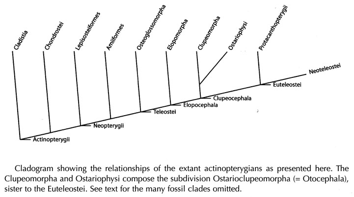 0087_00_Actinopterygians_relationship_cladogram_01