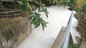 環保觸覺義務總幹事譚凱邦上周六到現場觀察,發現上游雨水渠出口 . . . . . . (環保觸覺提供)